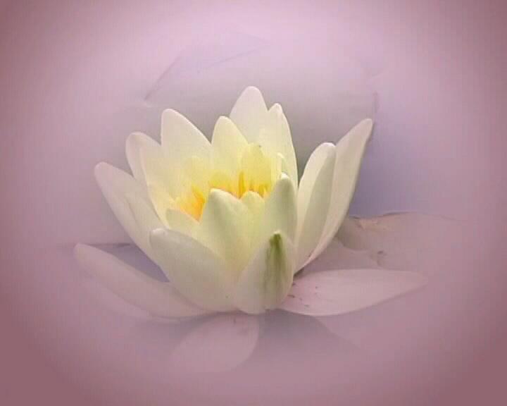 Meditación Raja Yoga Soltar y volar