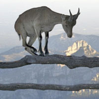 Resolver los problemas  y tratar con los obstáculos