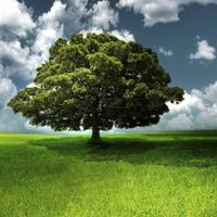Como un árbol repleto de fruta