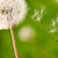 Desterrar el ego  y liberar la generosidad