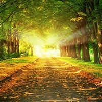 Para crear un nuevo camino